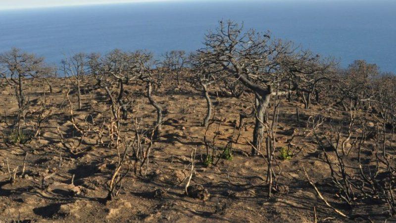 A dimora le ultime piantine. Concluso il progetto 10mila alberi per Pantelleria