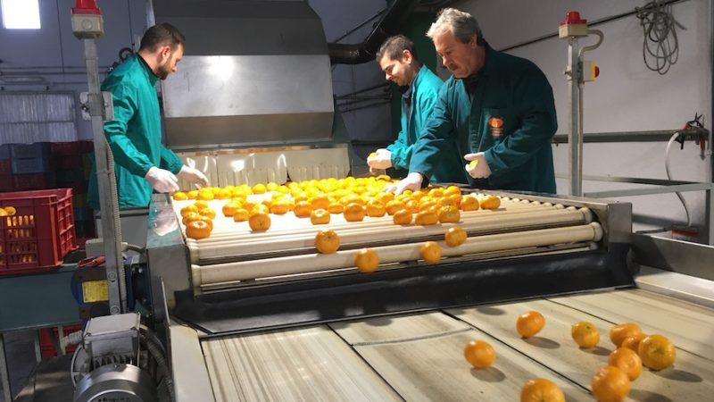 Blockchain e turismo relazionale nel Social Farming 3 del Distretto Agrumi di Sicilia