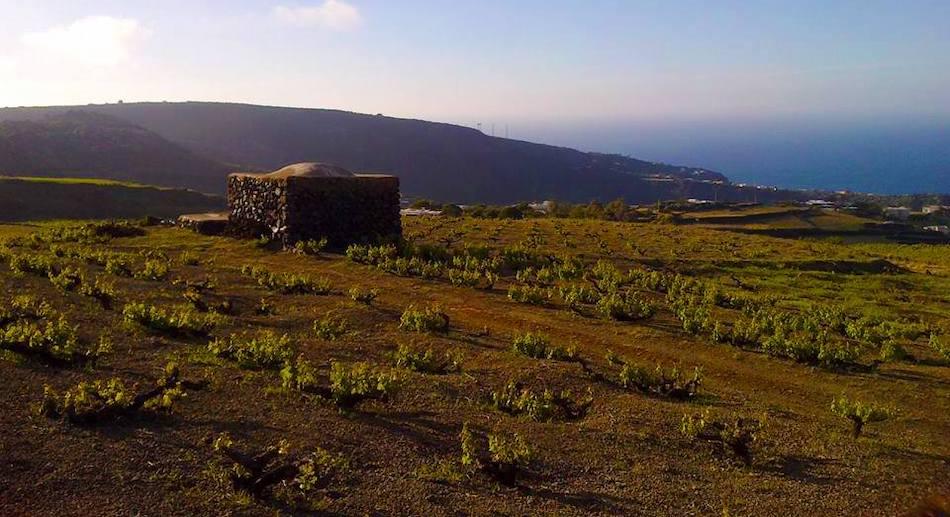 Il Parco di Pantelleria ha la sua mascotte: è un asinello in tenuta da trekking
