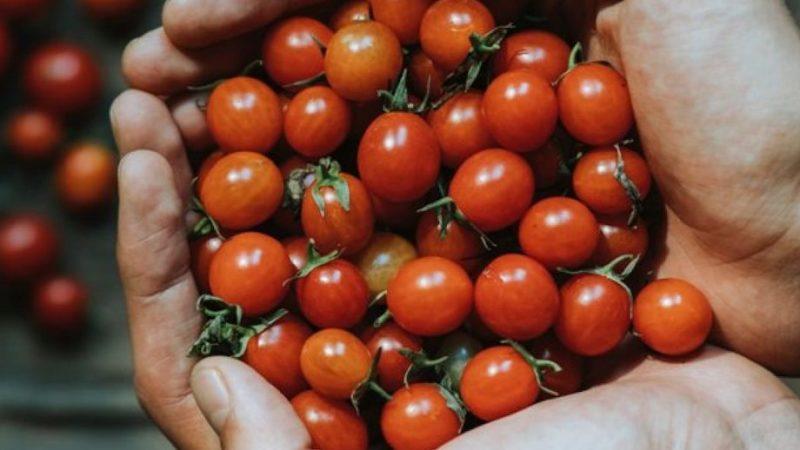 Debutta a Comiso il primo Tomato Village, salone dedicato al pomodoro