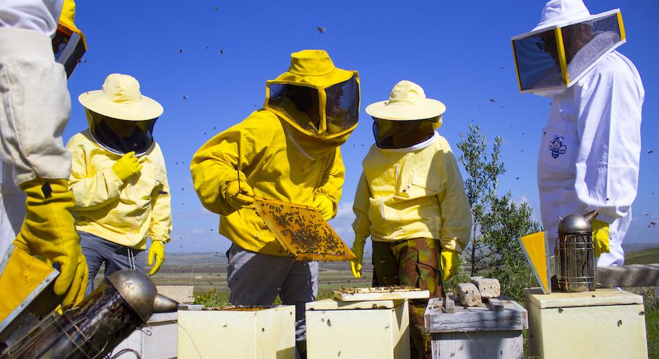 In arrivo 600 mila euro per l'apicoltura siciliana e Strasburgo dà l'ok alla risoluzione salva-api