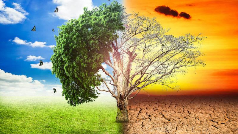 Cambiamenti climatici, pronte le linee guida per adattare l'agricoltura