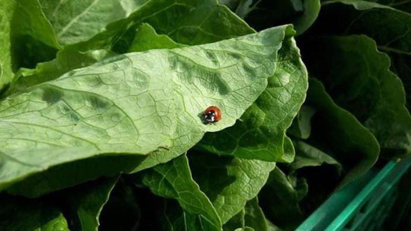 Orto e frutteto bio naturale: un corso per imparare tutti i segreti
