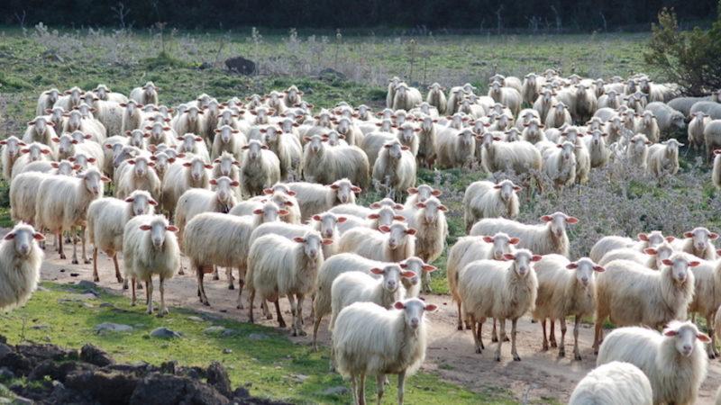 Workshop sulle produzioni animali sostenibili: bando per 25 ricercatori