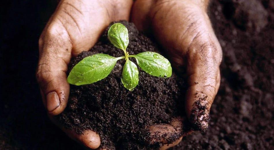 Agricoltura sostenibile, entro il 14 febbraio le candidature per Cultiv@te