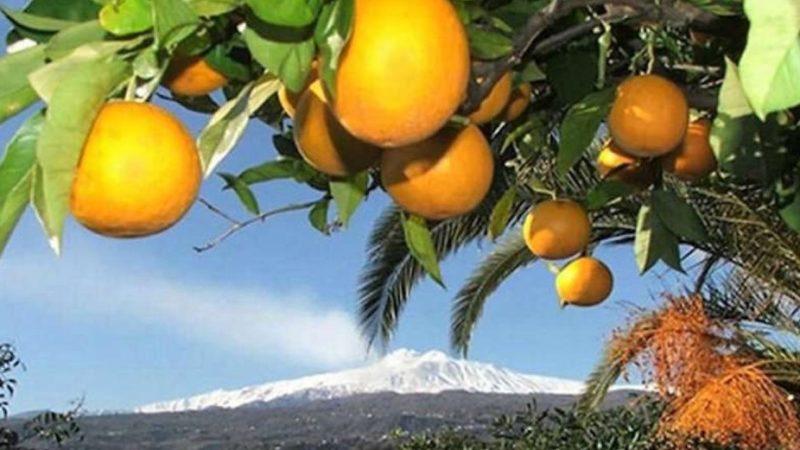 Il clima impazzito falcidia l'agricoltura siciliana. Danni ad agrumi e cereali
