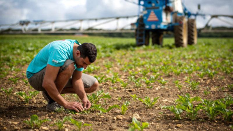 Consulenza aziendale, Timac Agro cerca in Sicilia agronomi e periti agrari
