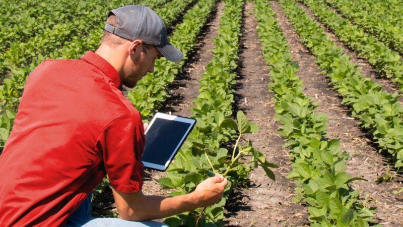 Agronomi, forestali e periti agrari: pronto il decreto per il bonus di 600 euro