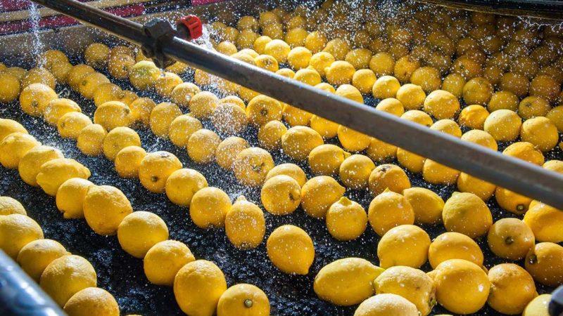 Decreto 22 marzo, ecco le attività agricole che non si dovranno fermare
