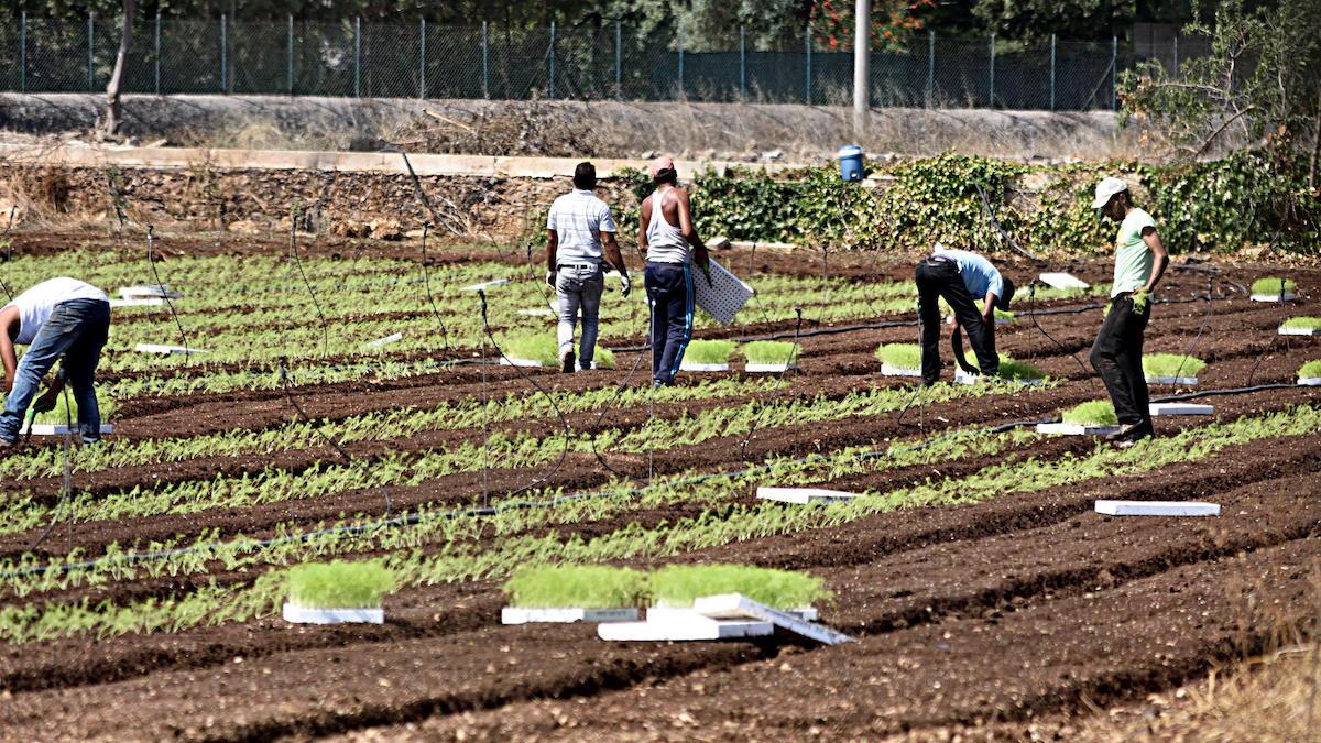 """Confeuro: """"Bonus Cura Italia agli operai? Diamolo con la ds agricola"""""""
