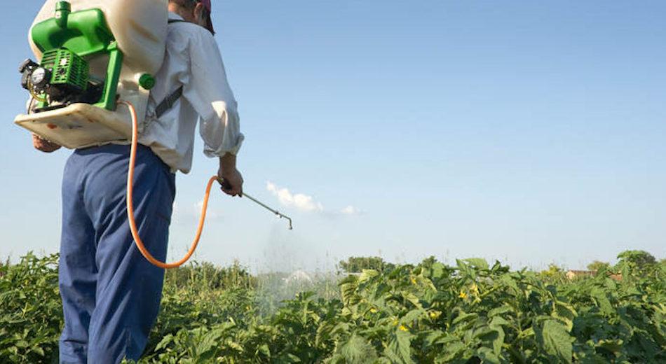 Patentino fitosanitario, è allarme scadenza. Ma in Sicilia c'è già la proroga