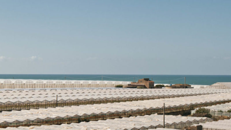 Sos dalla Sicilia agricola del Sud Est: pochi braccianti, raccolta a rischio