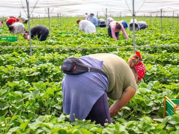 Emergenza manodopera, domanda e offerta di lavoro su AgriJob