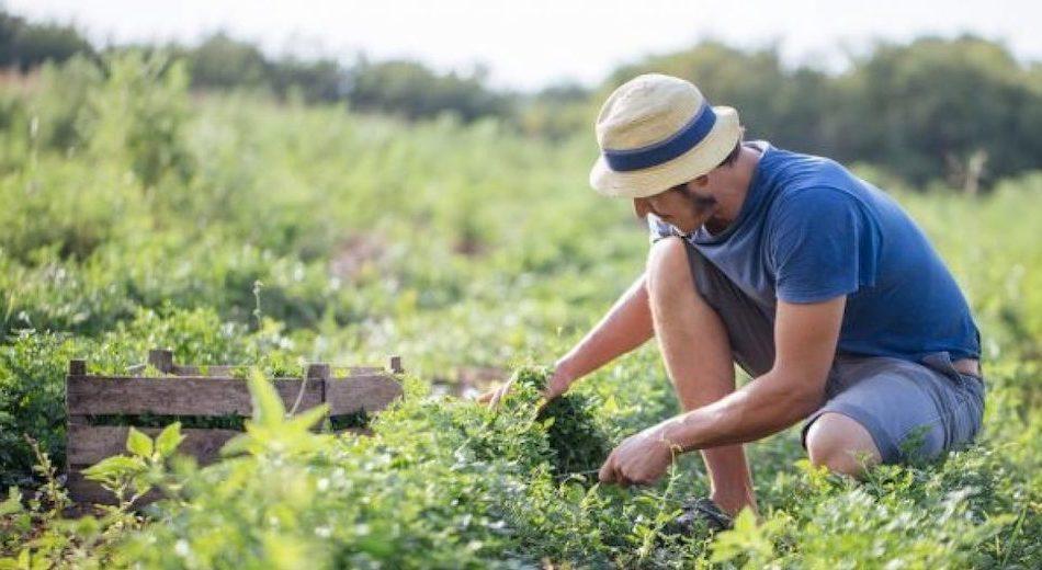 Banca della Terra di Sicilia,  pubblicato 2° bando: 450 ettari di terra per i giovani