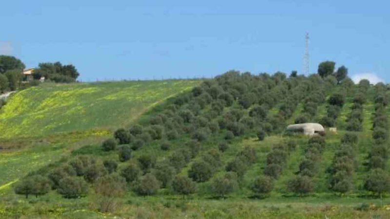 bando PSR Sicilia