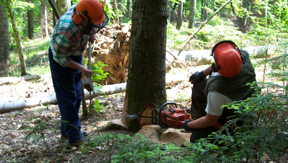 Forestali, piano stabilizzazioni tra un mese. Per ora solo contratti a termine