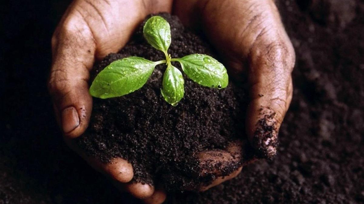 Covid-19 e crisi agricola, al ministero la ricetta di agronomi e forestali