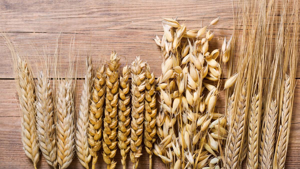 Pasta nutriente e sostenibile? Il Crea: nei grani antichi i segreti genetici