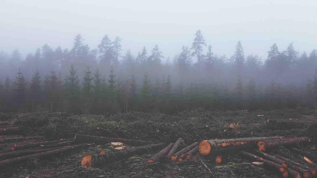 Ecosistema a rischio? La ricetta: rese più alte e meno suolo per le colture