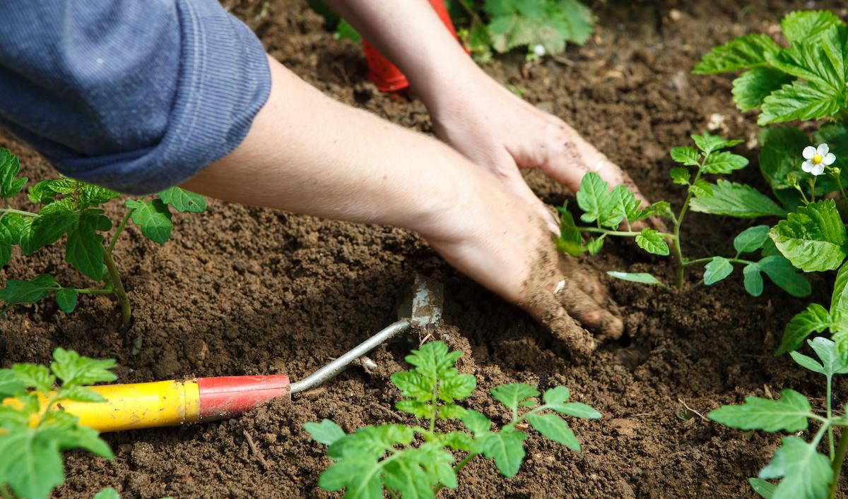 Musumeci dà il via libera in Sicilia alla cura di orti e frutteti di famiglia