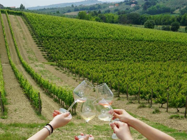 comparto vitivinicolo