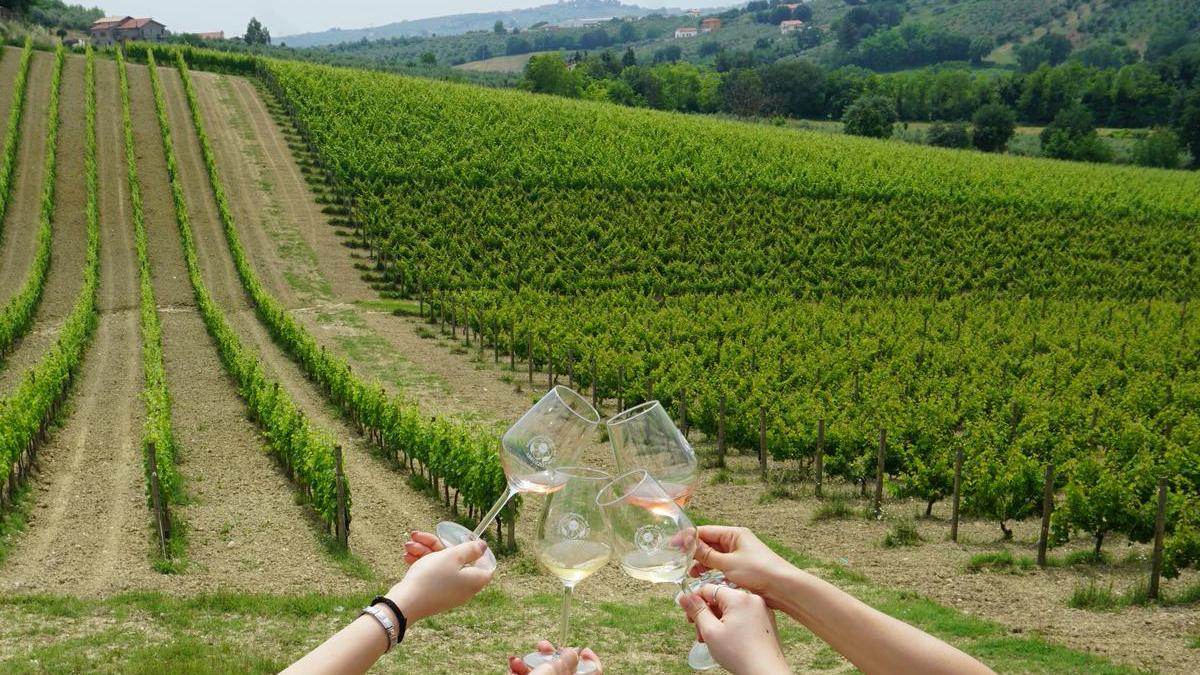 """Ecco le misure inserite nel Dl """"Rilancio"""" per il comparto vitivinicolo"""