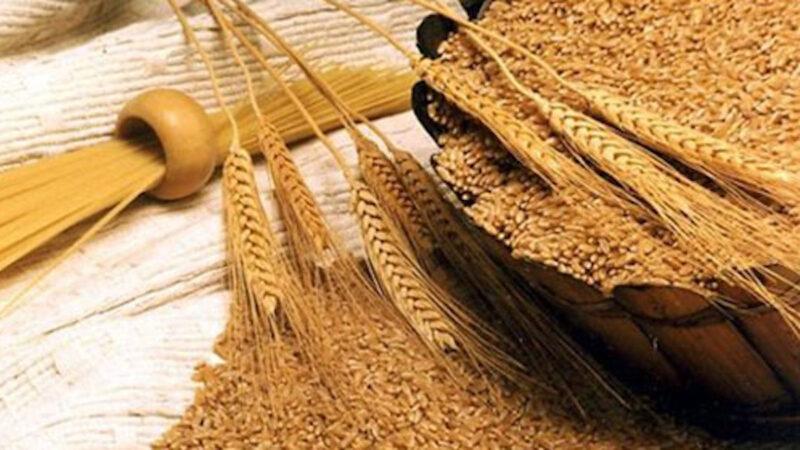 filiera grano duro