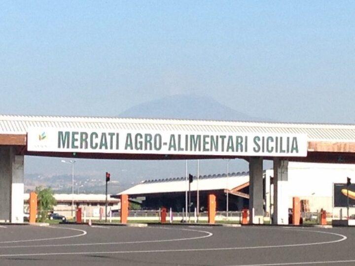Maas Catania
