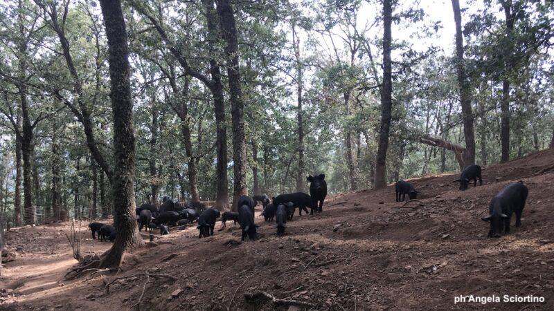aree silvo-pastorali