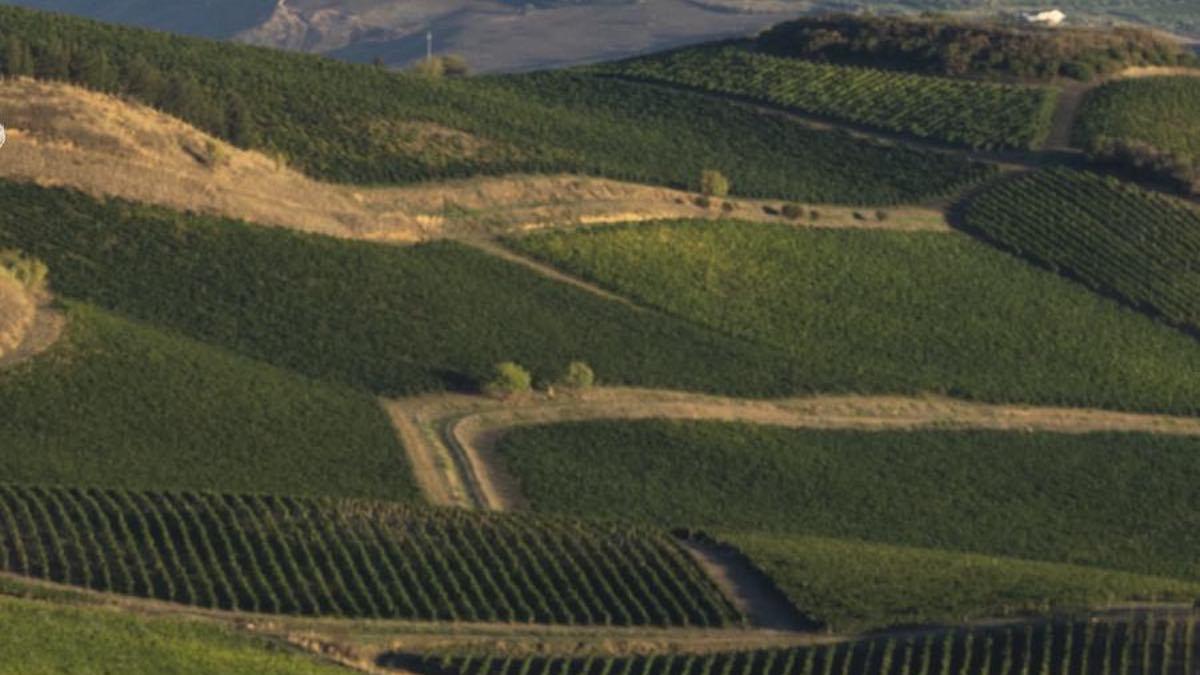 Vitivinicoltura green in Sicilia, nasce la Fondazione SOStain
