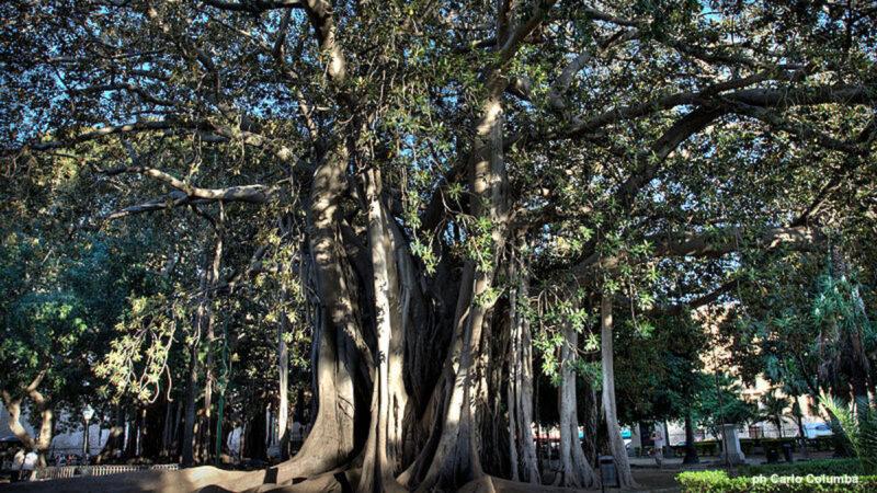 alberi monumentali