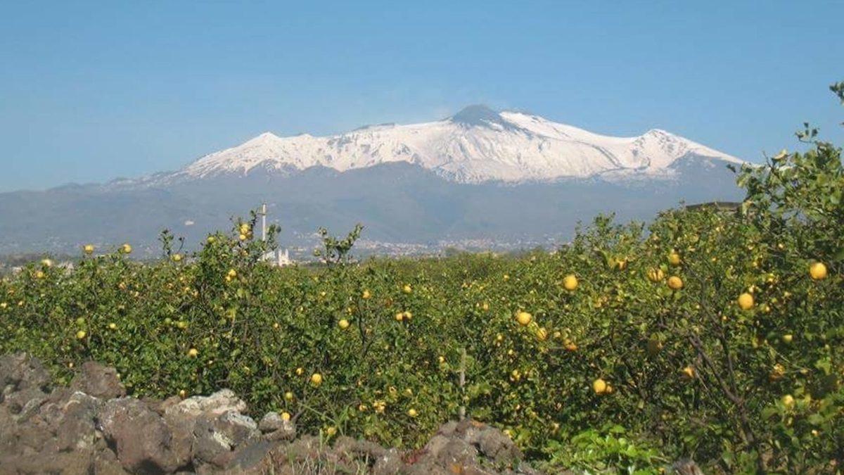 Limone dell'Etna Igp, sempre più vicino il riconoscimento ufficiale della Ue