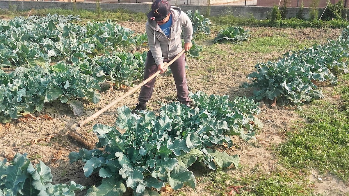 Psr Sicilia, al via due bandi per finanziare progetti di agricoltura sociale