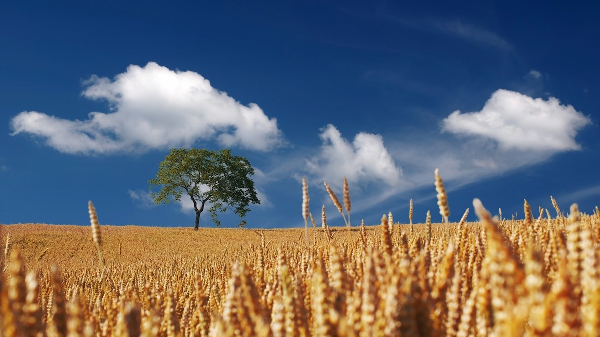 """""""Cibo per la mente Talks"""", webinar dedicato a Farm to Fork"""