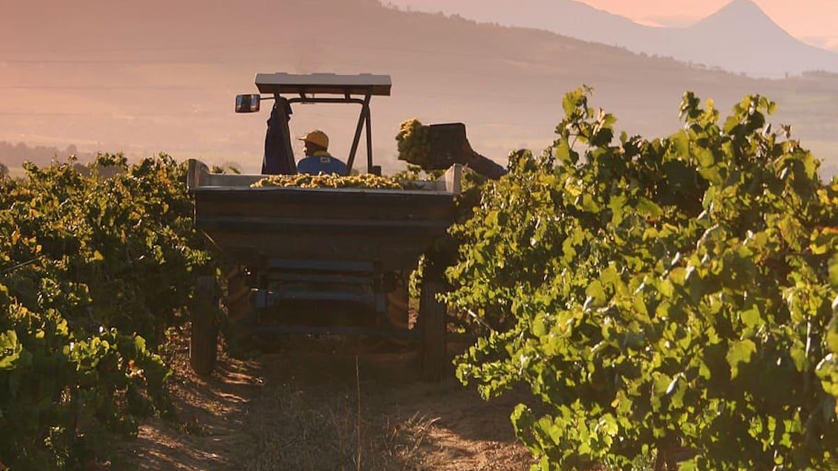 """PrestO, ecco i """"nuovi"""" voucher per il lavoro occasionale in agricoltura"""