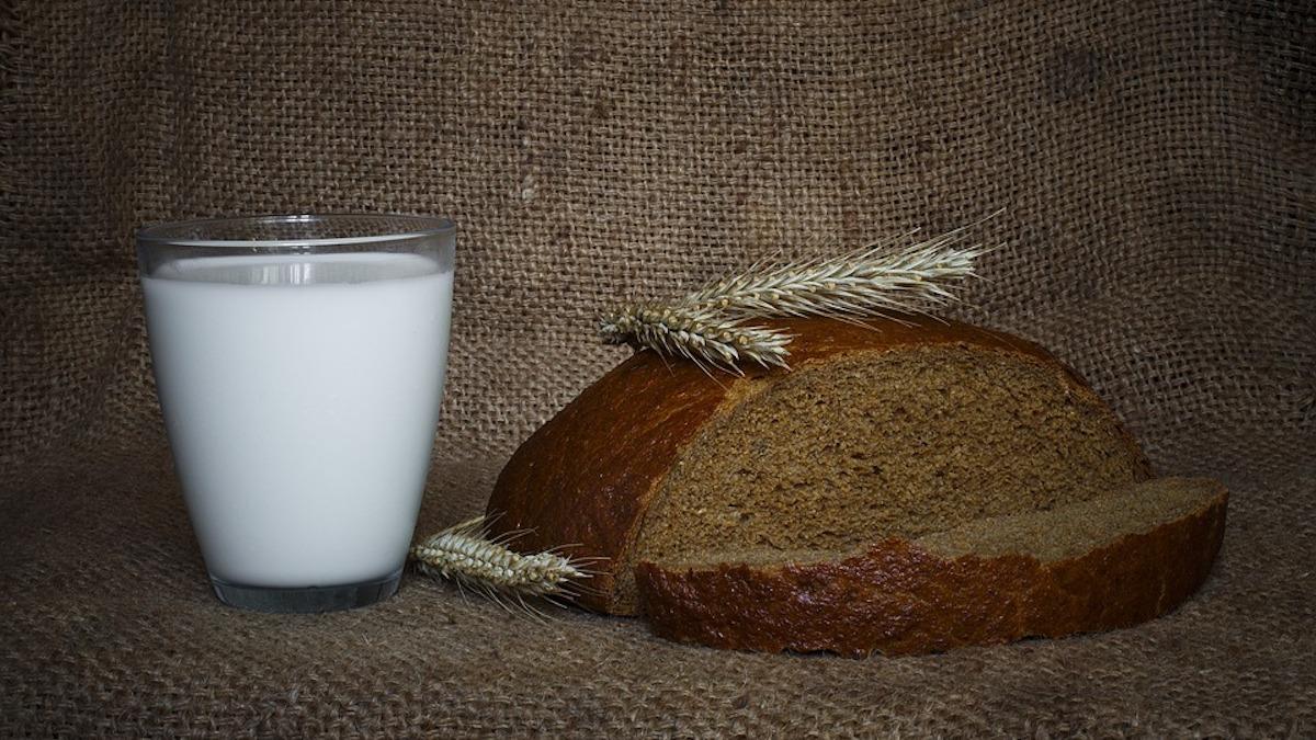 Its Sicani, bando per corsi gratuiti su grano e prodotti lattiero-caseari