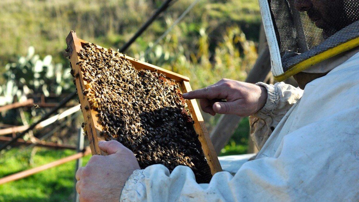 Decreto Legge Agosto, la norma sull'apicoltura divide le associazioni