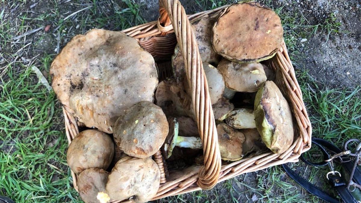 Funghi epigei, corso a Palermo per ottenere il permesso di raccolta