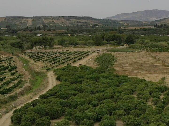 ricambio varietale agrumi
