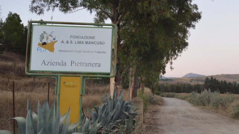 Fondazione Lima Mancuso