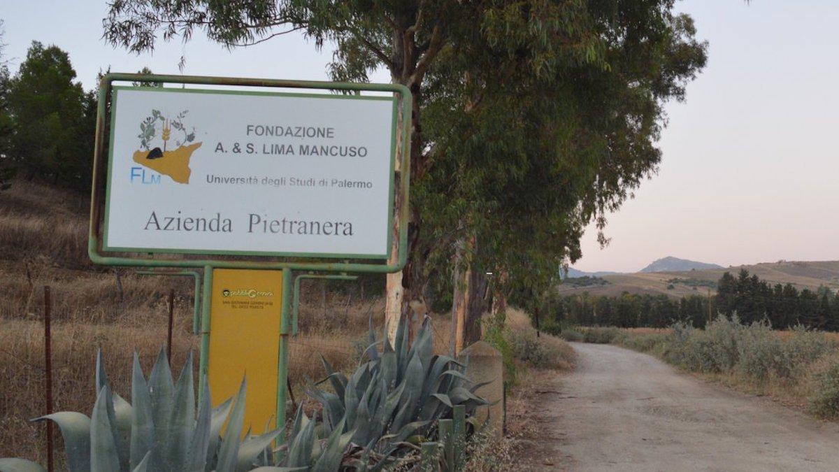 Fondazione Lima Mancuso, borse di studio per laureati in agraria