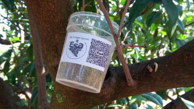 insetti-utili-biofabbrica-Esa