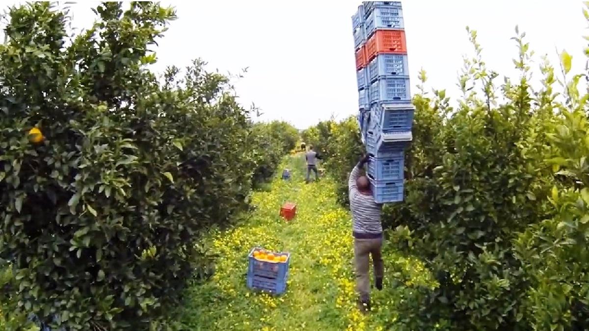 Decreto Ristori, scadenza prorogata per il bonus ai braccianti agricoli