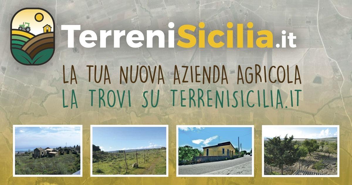 Terreni e aziende agricole,  un portale per acquistare e vendere in Sicilia