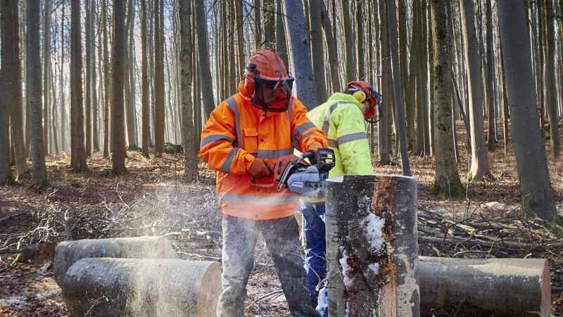 riforma forestale