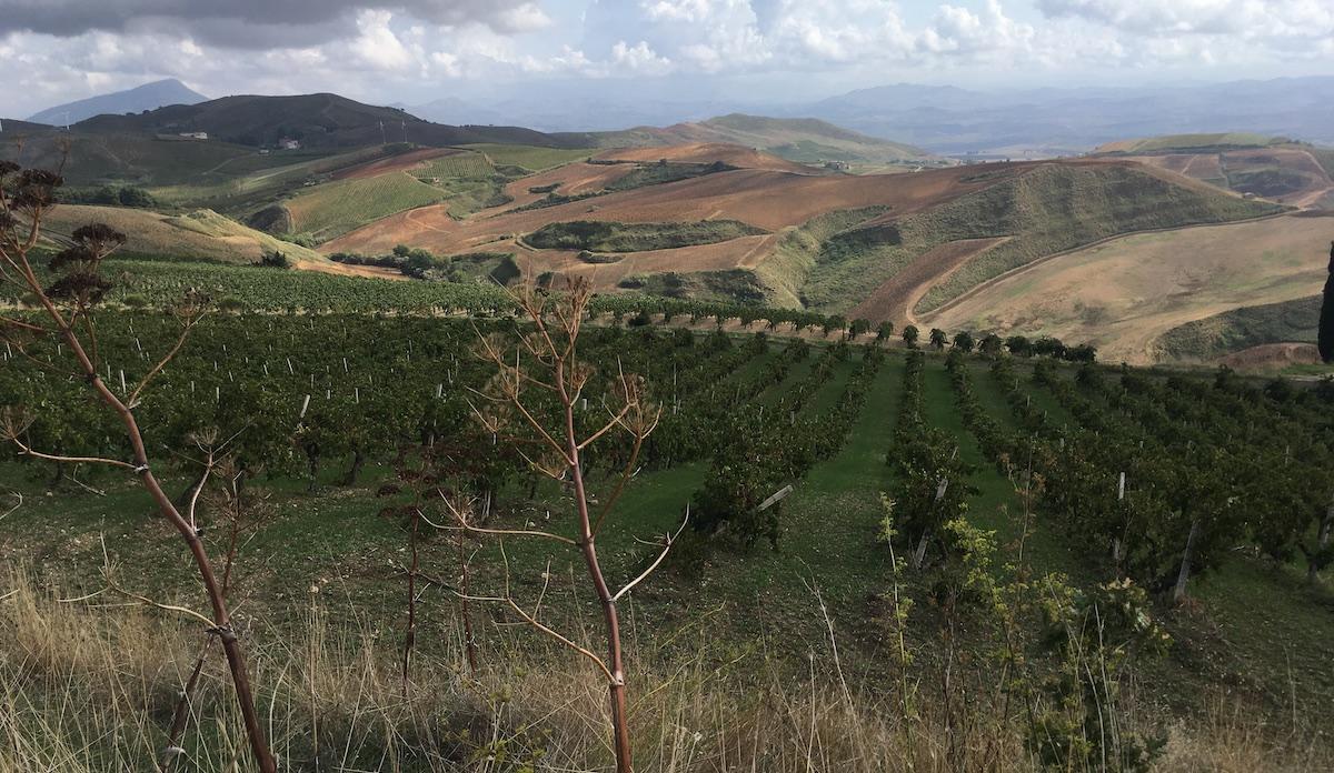 Sviluppo rurale, scontro tra le Regioni sui fondi per il biennio 2021-22