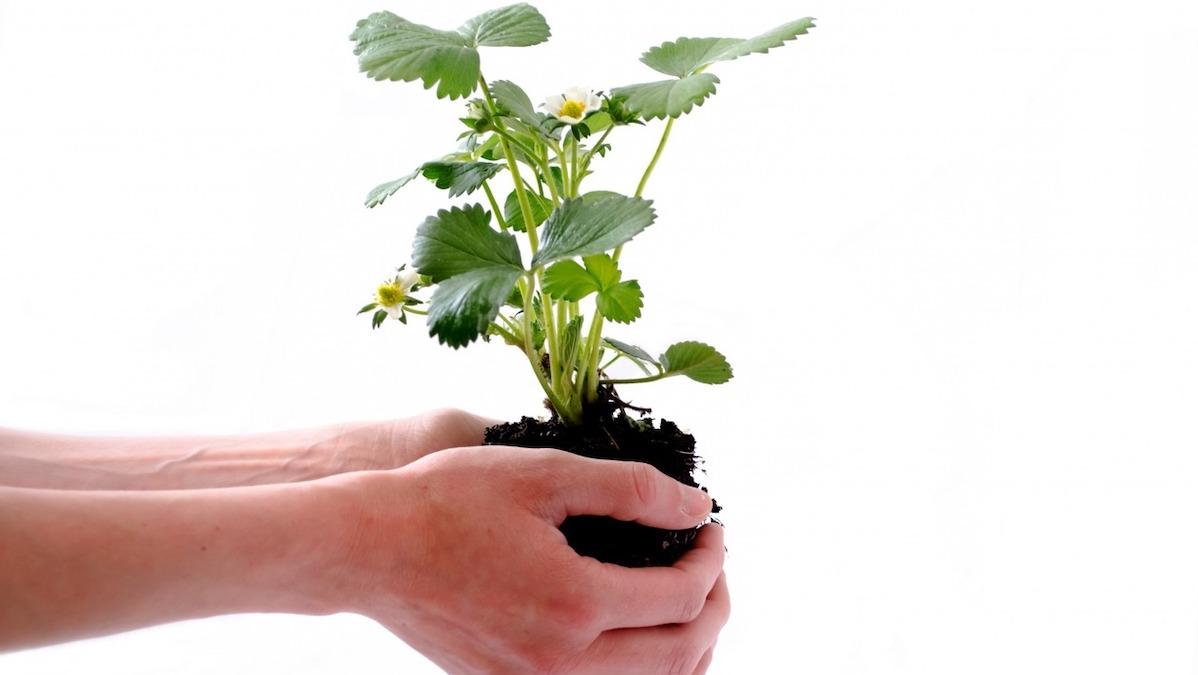 Scommettiamo sull'agricoltura: formazione, colture e opportunità