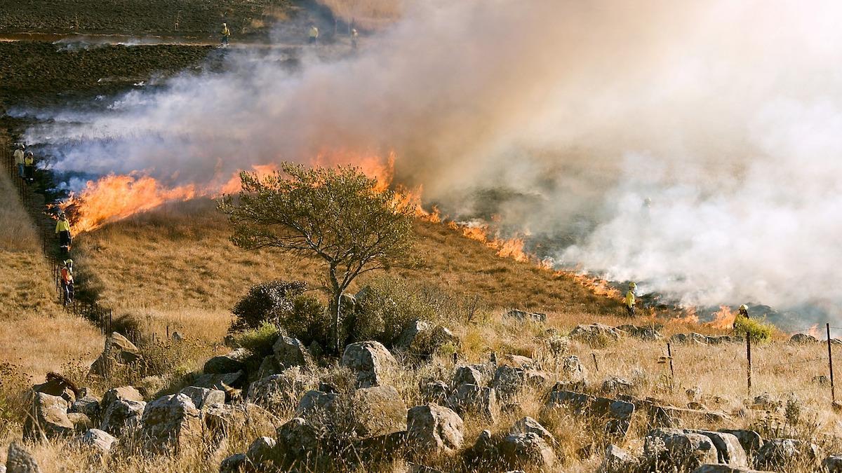 Incendi, ristori della Protezione Civile per gli allevatori in difficoltà