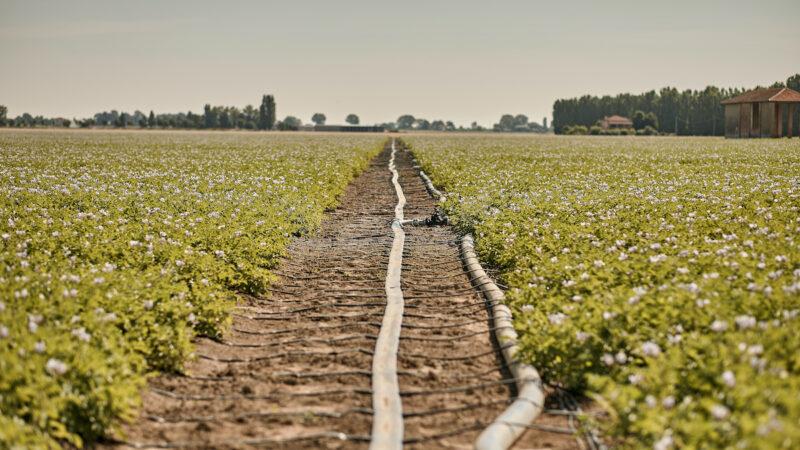 Irritec irrigazione di precisione Senegal