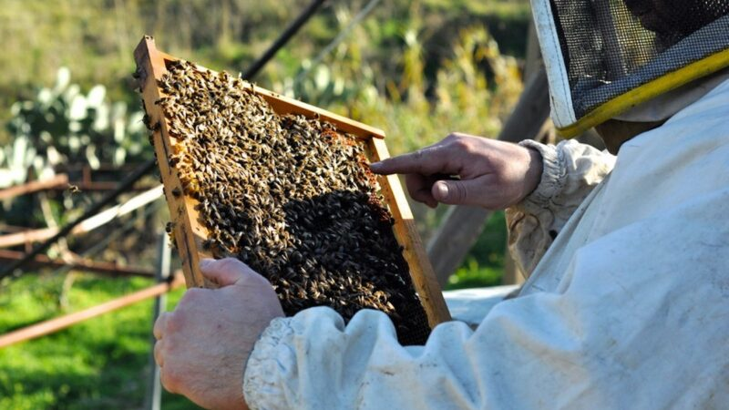 webinar apicoltura